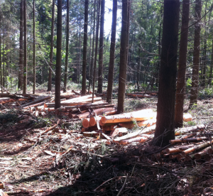 gestion-forestière