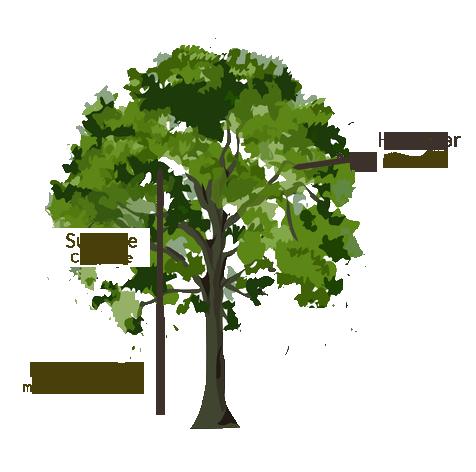 schema arbre copie